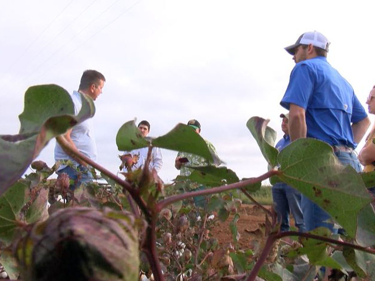 Caprock Winery recognizes growers with Cotton and Wine Celebration
