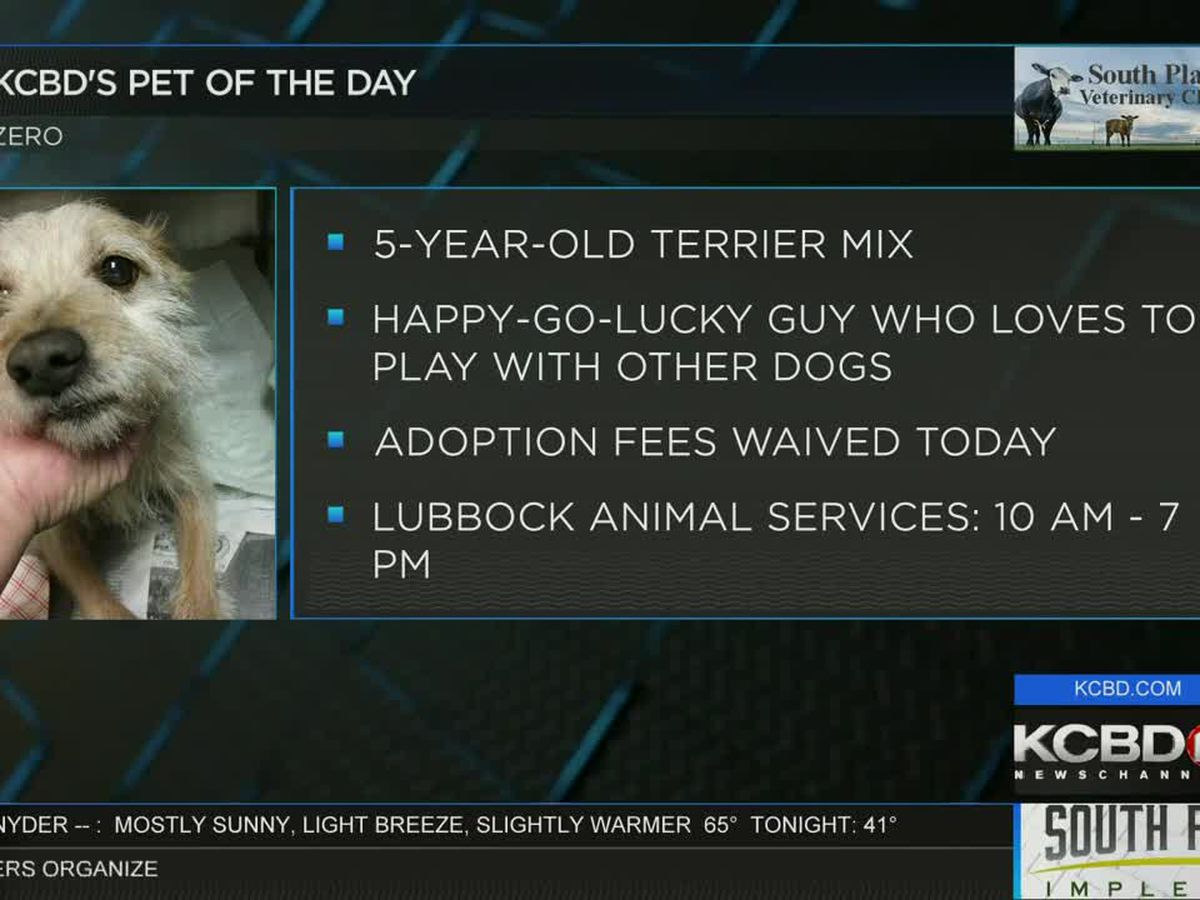 KCBD's Pet of the Day: Meet Zero