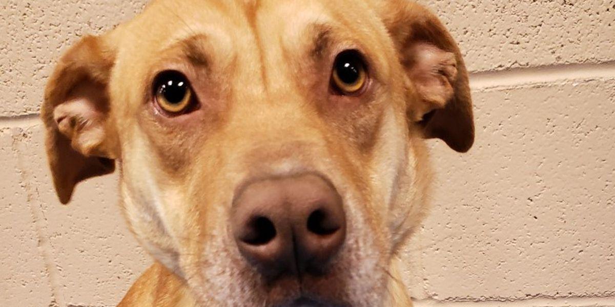 KCBD's Pet of the Day: Meet Carter