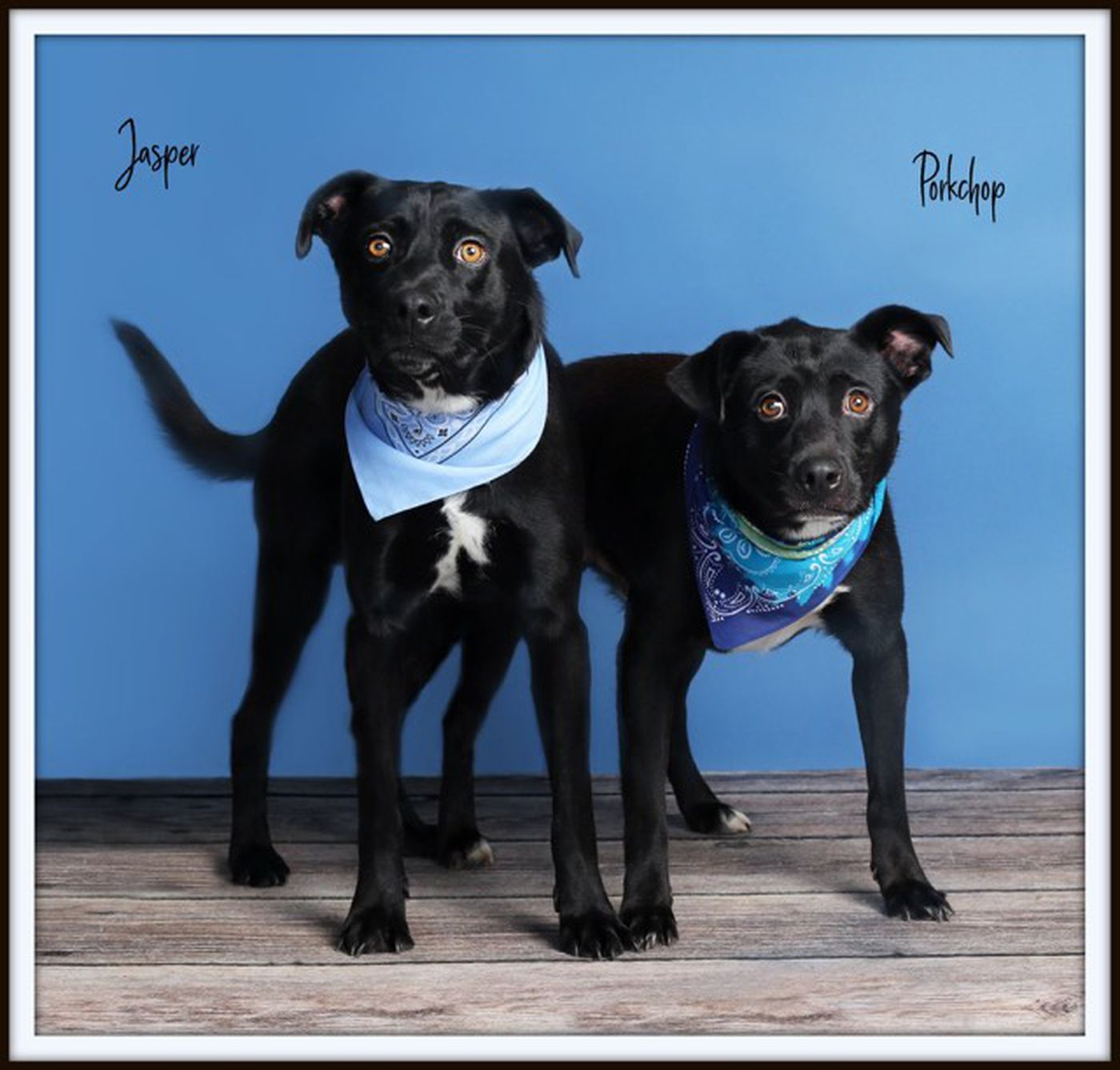 KCBD's Pet(s) of the Day: Porkchop and Jasper
