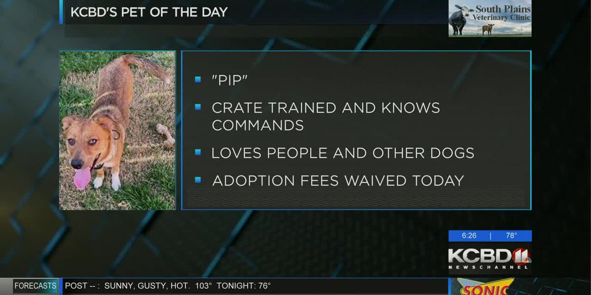 KCBD's Pet of the Day: Meet Pip