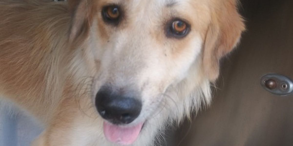KCBD's Pet of the Day: Meet Blondie