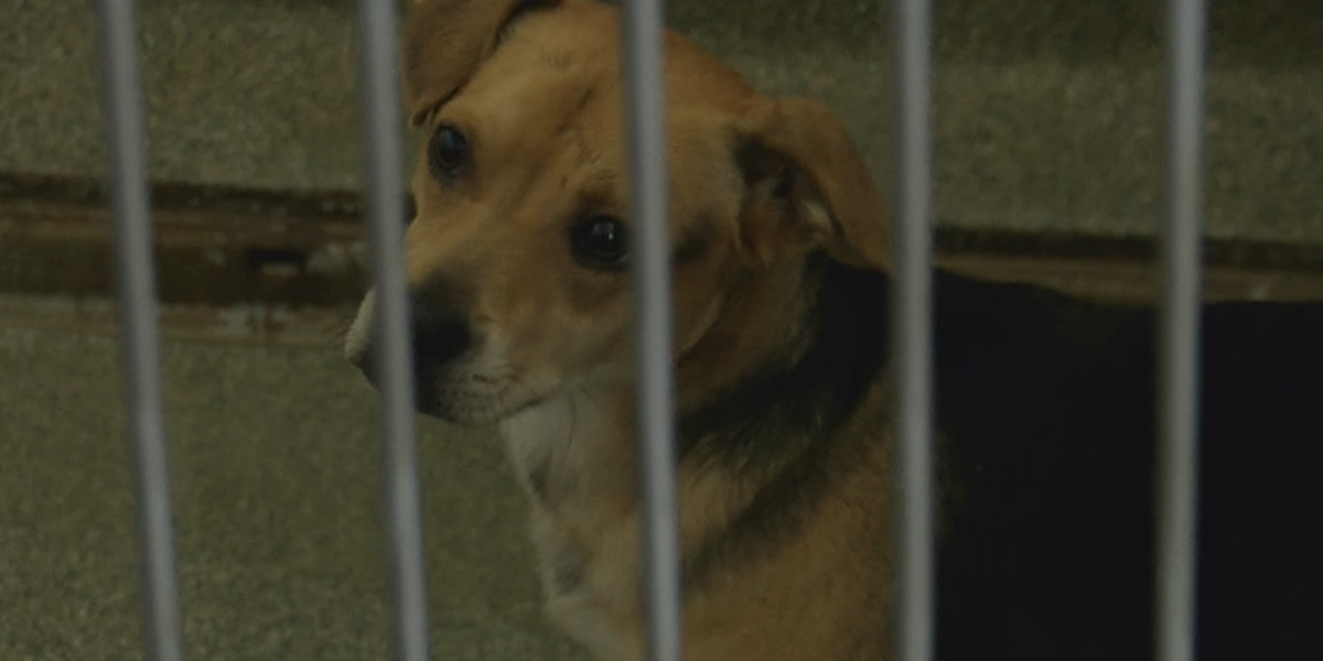 Lubbock Animal Services affected by power outage