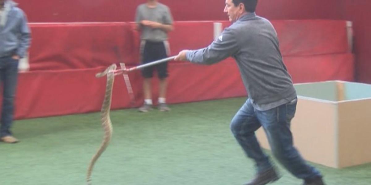 I Beat Pete: Rattlesnake Relay Challenge