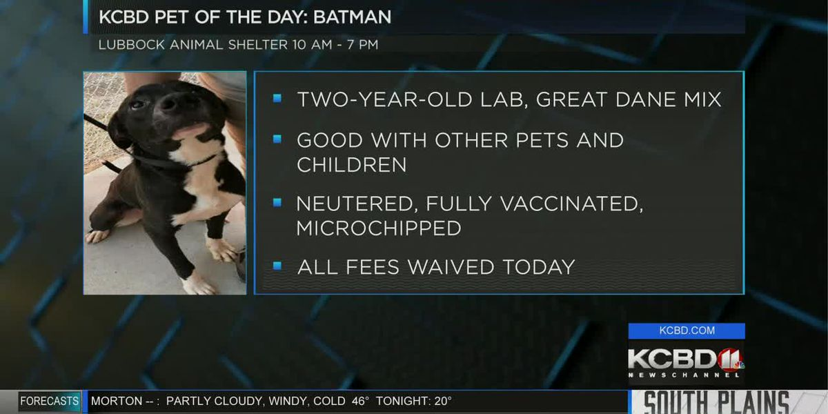 Pet of the Day - Jan. 22