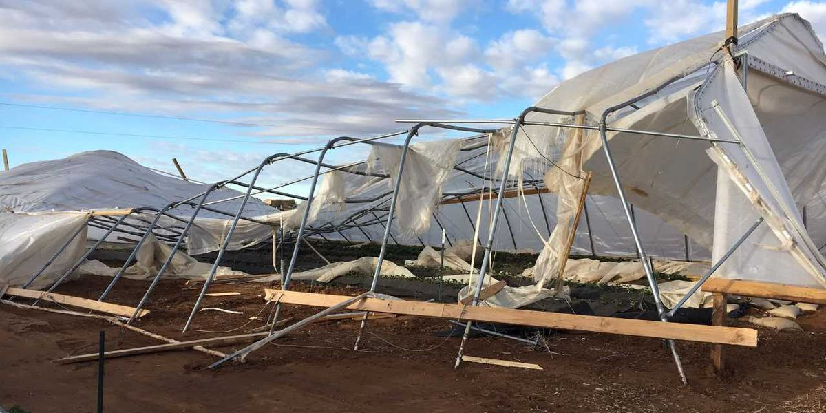 South plains farmer couple left to clean up high tunnel debris after last week's winds