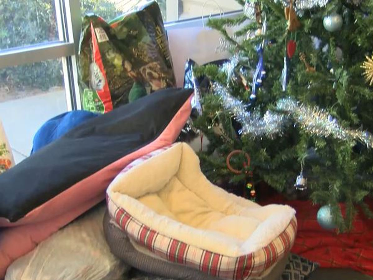 Lubbock Animal Shelter asks you to think wisely about Christmas present pets