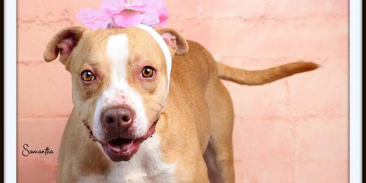 KCBD's Pet of the Day: Meet Samantha