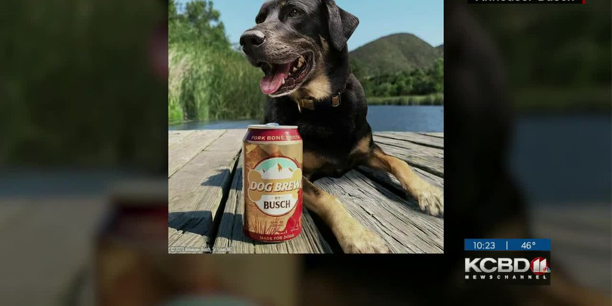 Beer company looking for dogs to test dog brew