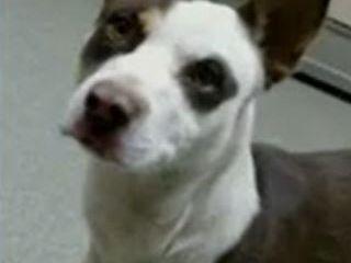 KCBD's Pet of the Day: Meet Ziggy