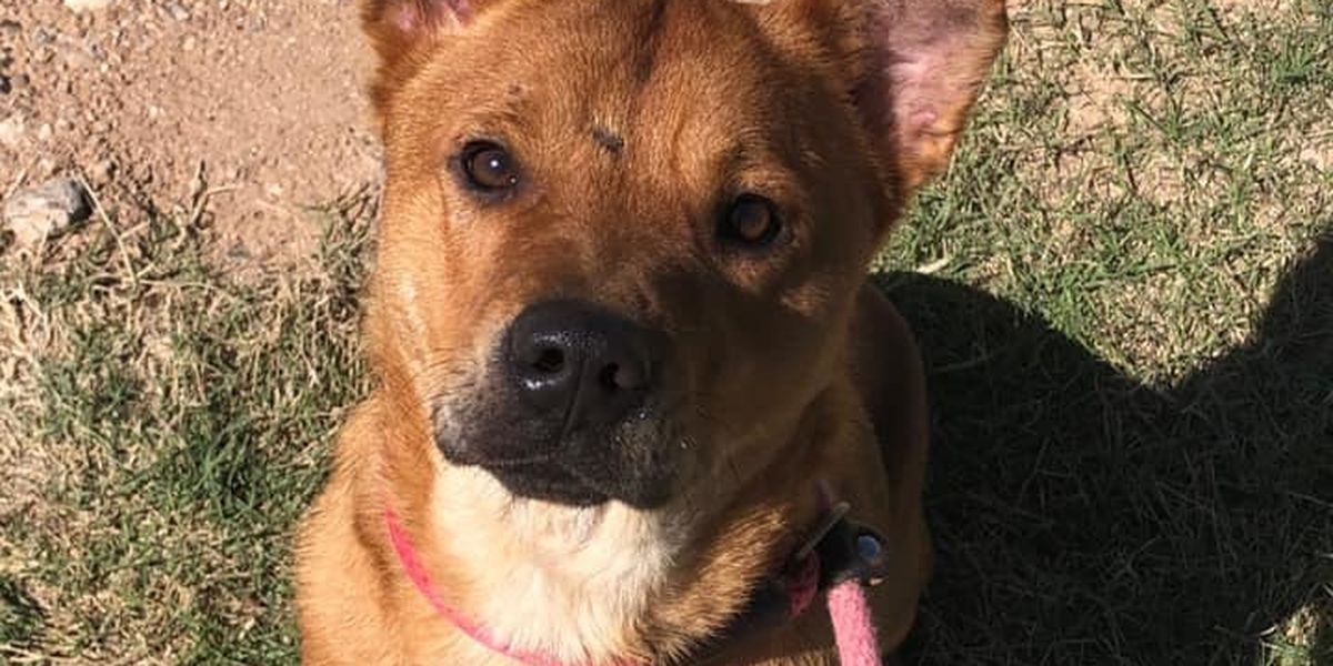 KCBD's Pet of the Day: Meet Koots