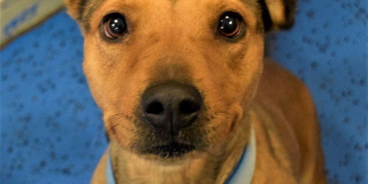 KCBD's Pet of the Day: Meet Meredith