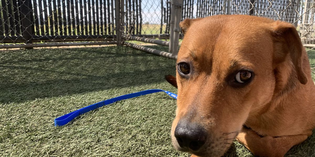 KCBD's Pet of the Day: Meet Kali