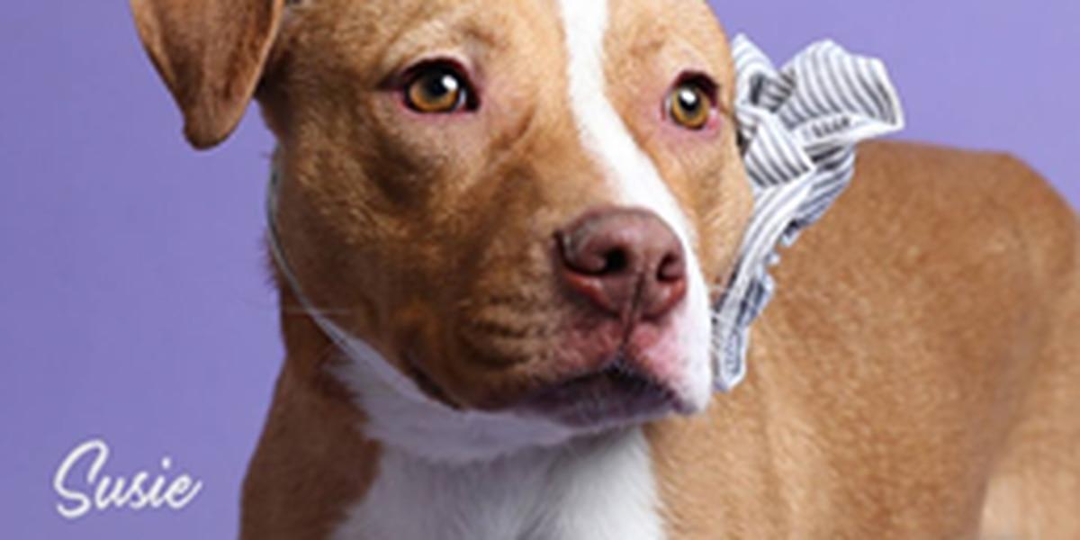KCBD's Pet of the Day: Meet Susie
