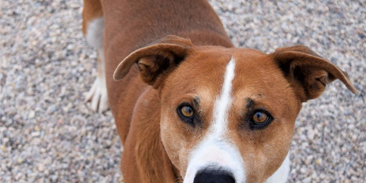 KCBD's Pet of the Day: Meet Dale
