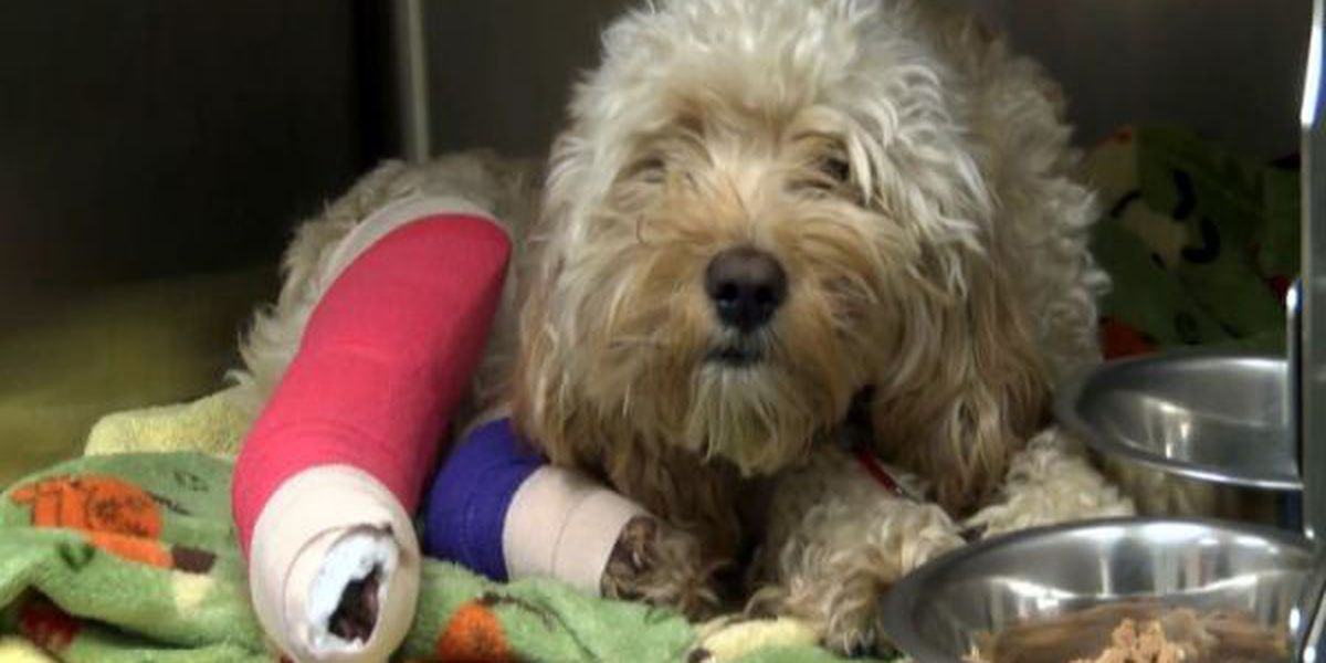 Wounded veteran reunited with therapy dog