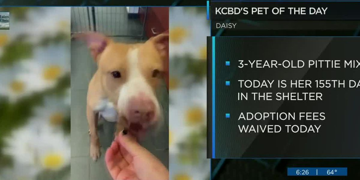KCBD's Pet of the Day: Meet Daisy