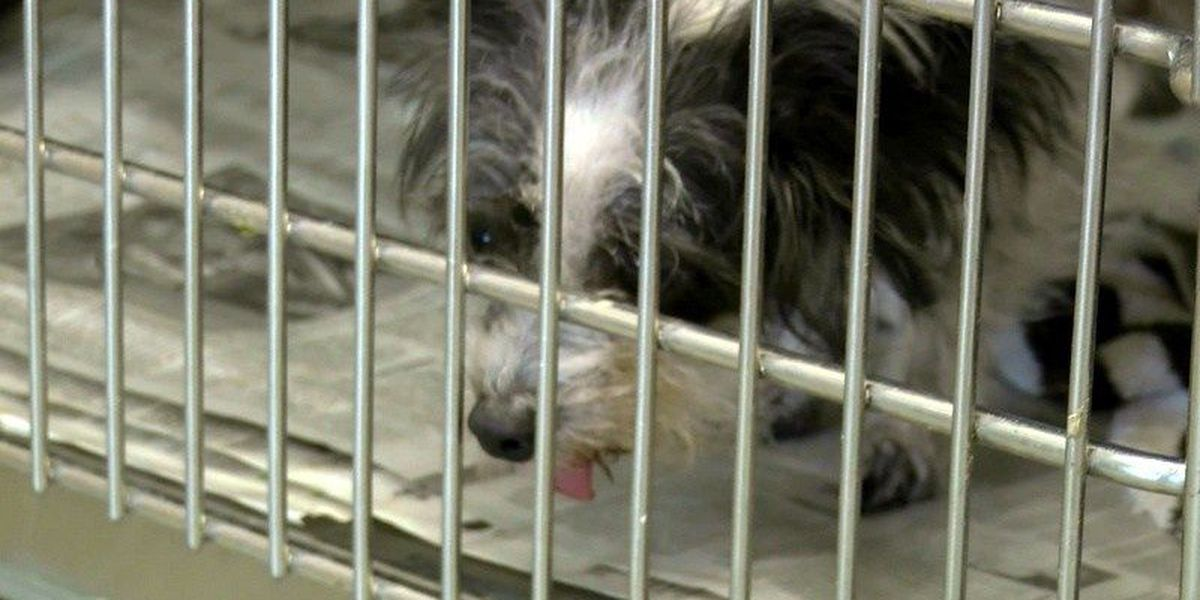 97 pets find homes during Lubbock Animal Shelter's free adoption event