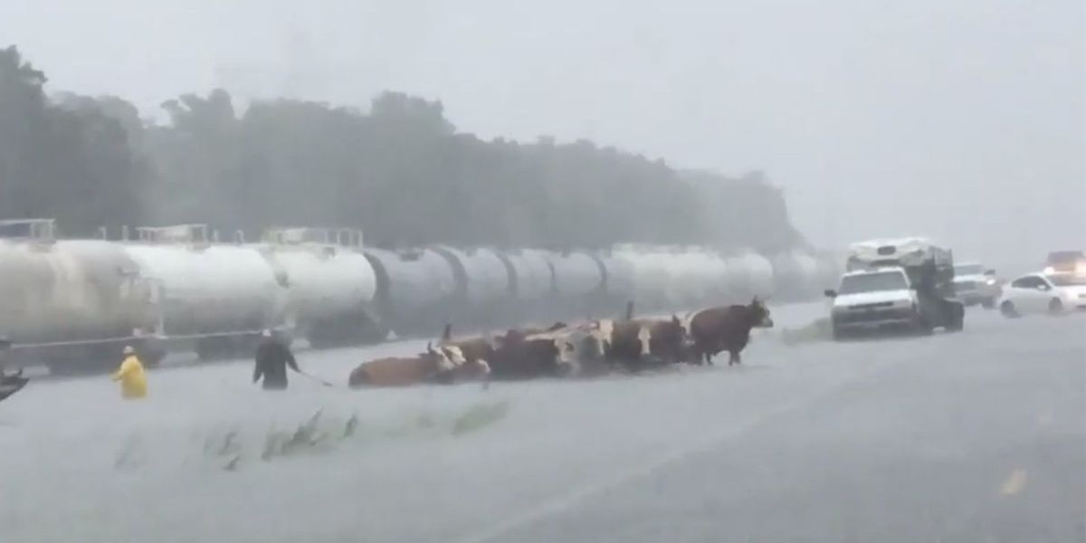 Harvey's winds and rain disrupt Texas agriculture