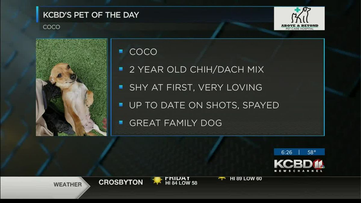 KCBD's Pet of the Day: Meet Coco