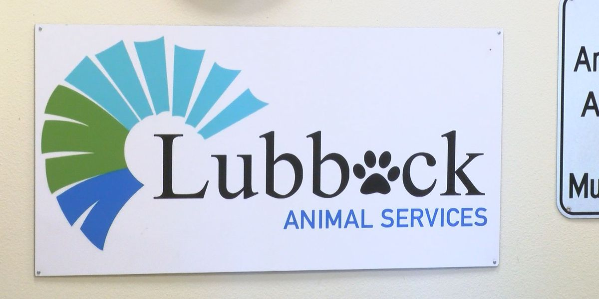 Lubbock Animal Services save rate increases by more than 60 percent