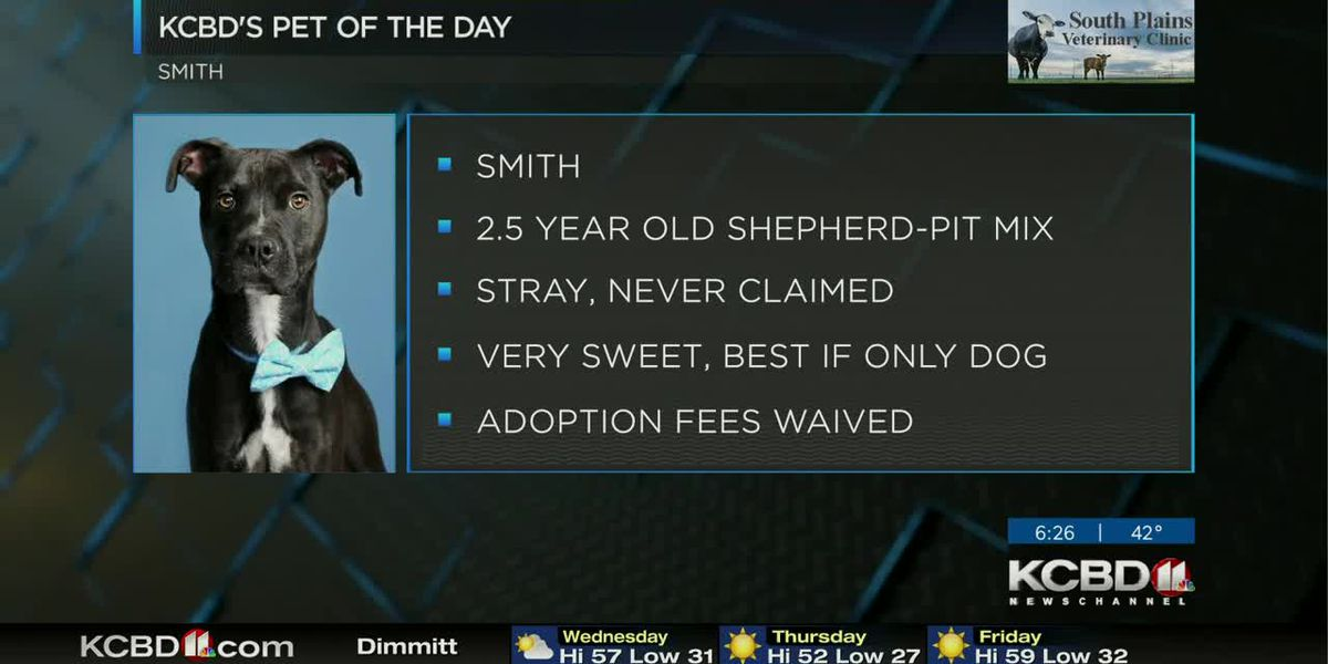 KCBD's Pet of the Day: Meet Smith
