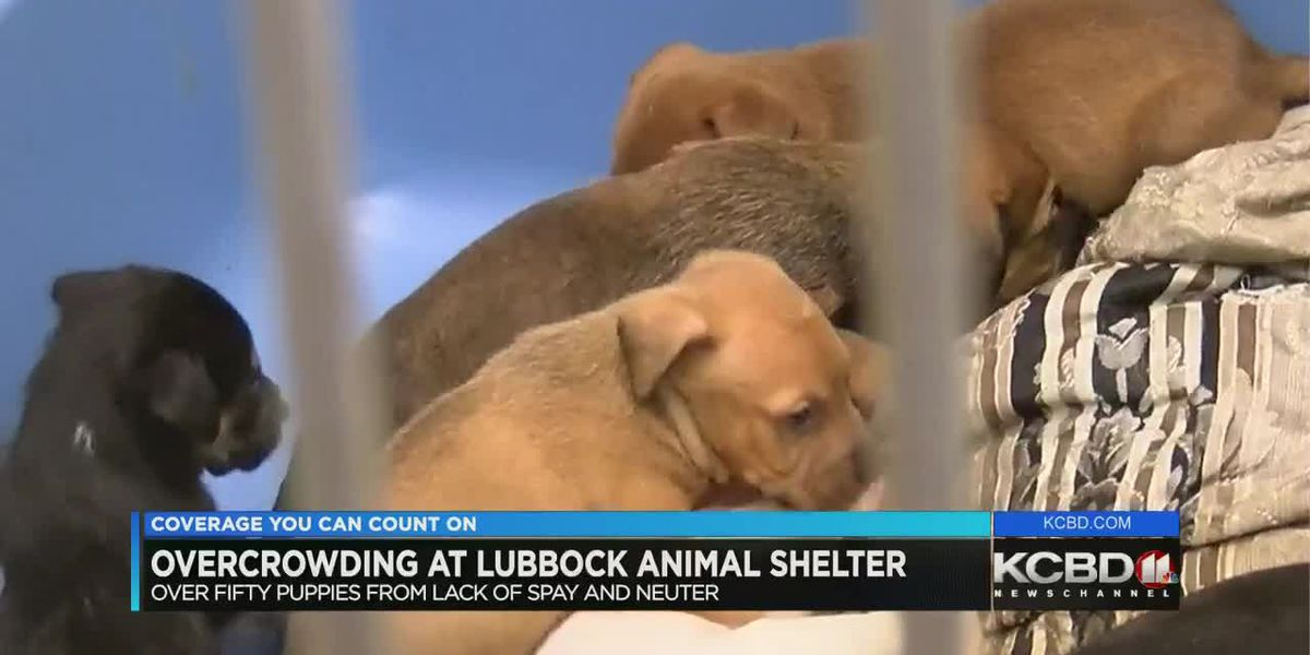Overcrowding at Lubbock Animal Shelter
