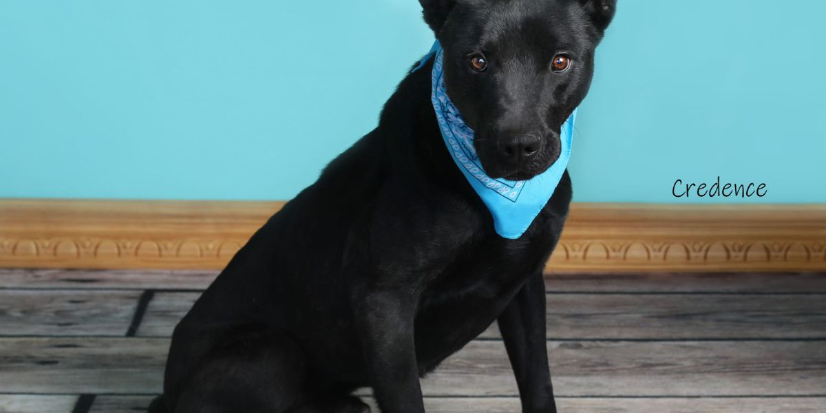 KCBD's Pet of the Day: Meet Credence