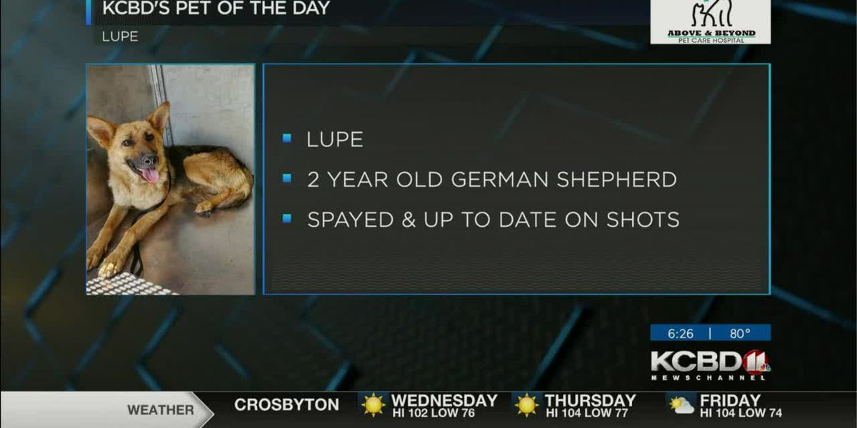 KCBD's Pet of the Day: Meet Lupe