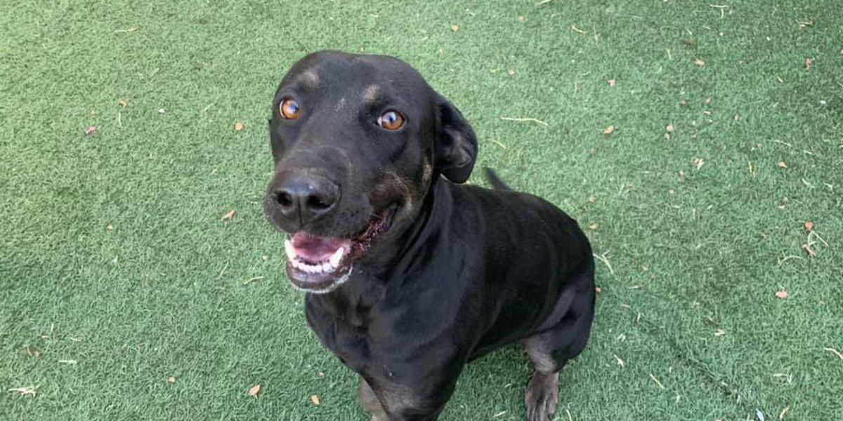 KCBD's Pet of the Day: Meet Ringa