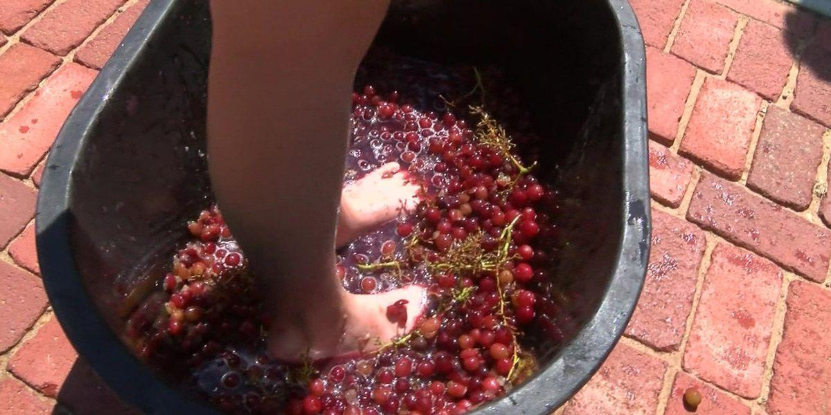 I Beat Pete: Grape Olympics