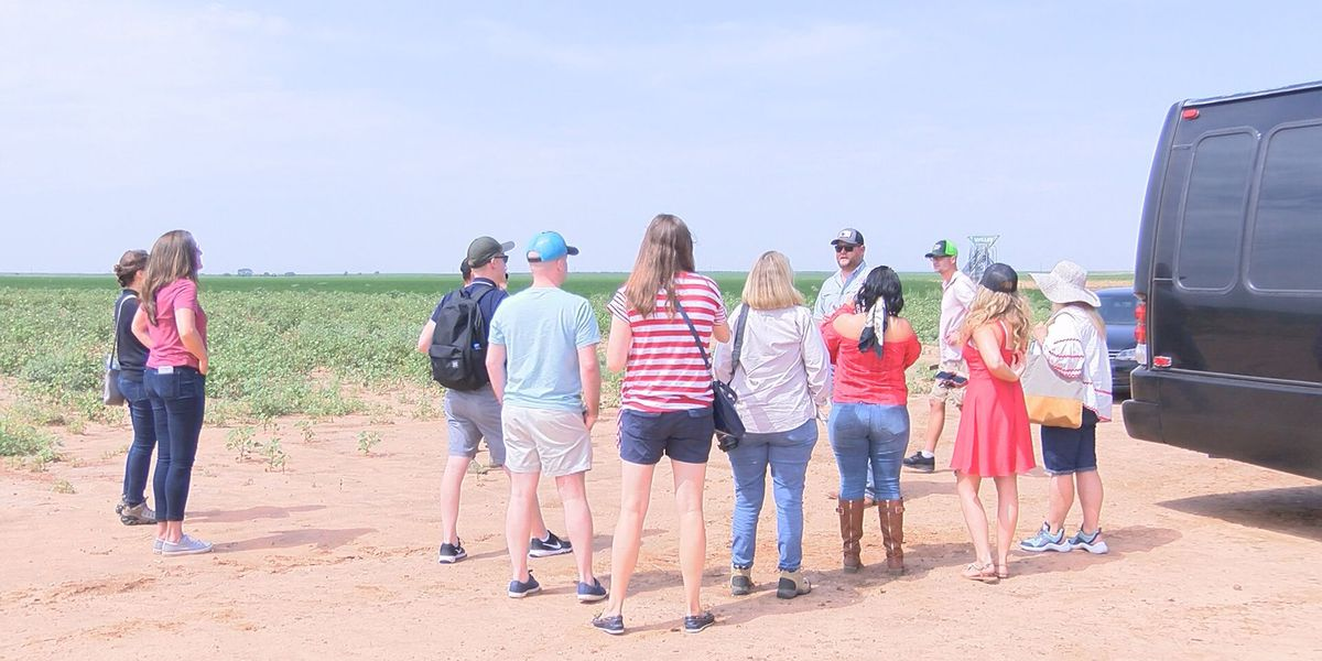 Texas peanut producers give tour about peanut crops in West Texas