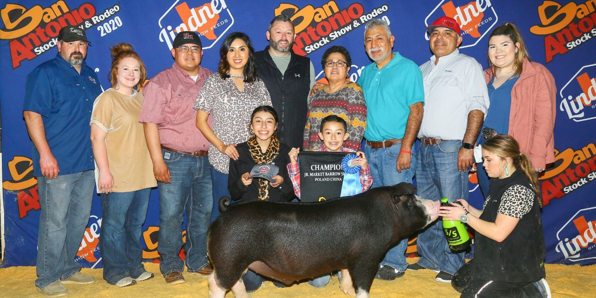 New Home ISD student presents Breed Champion at San Antonio Stock Show, wins $10,000