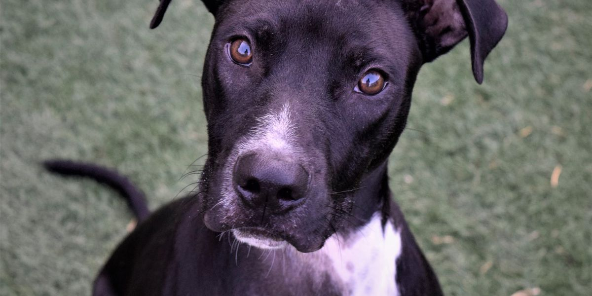 KCBD's Pet of the Day: Meet Dude
