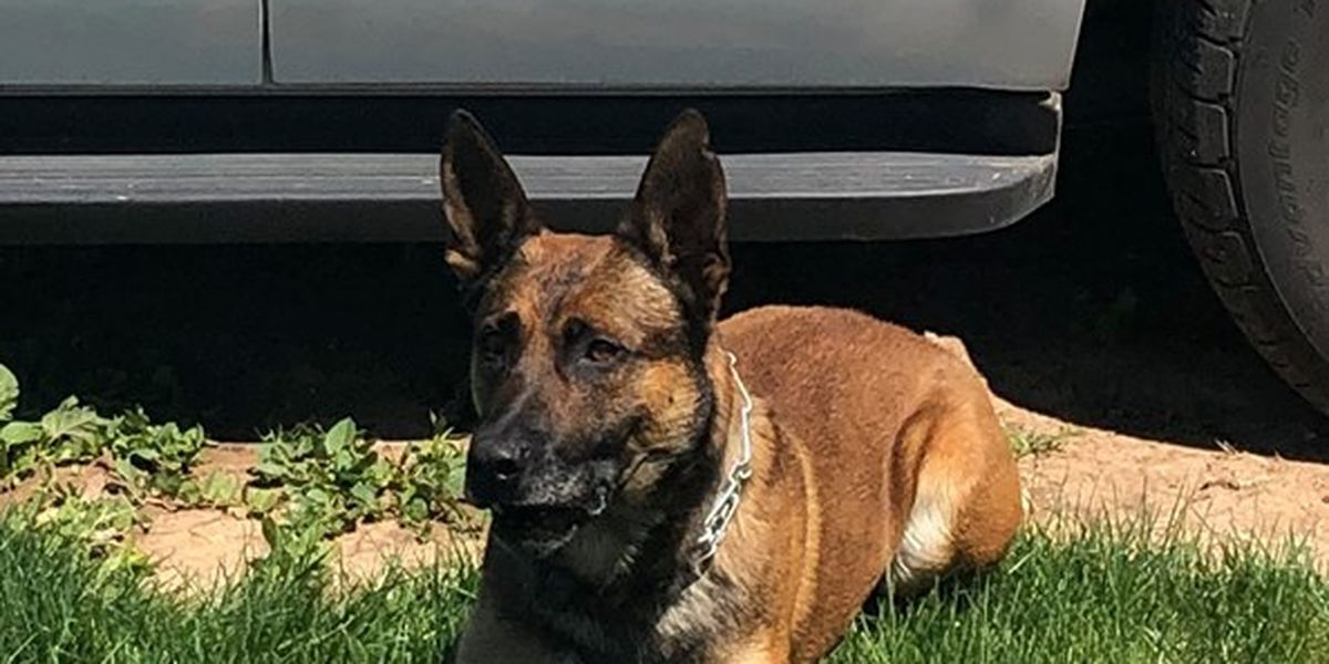 Amarillo officer and K9 find more than $1 million worth of heroin and cocaine