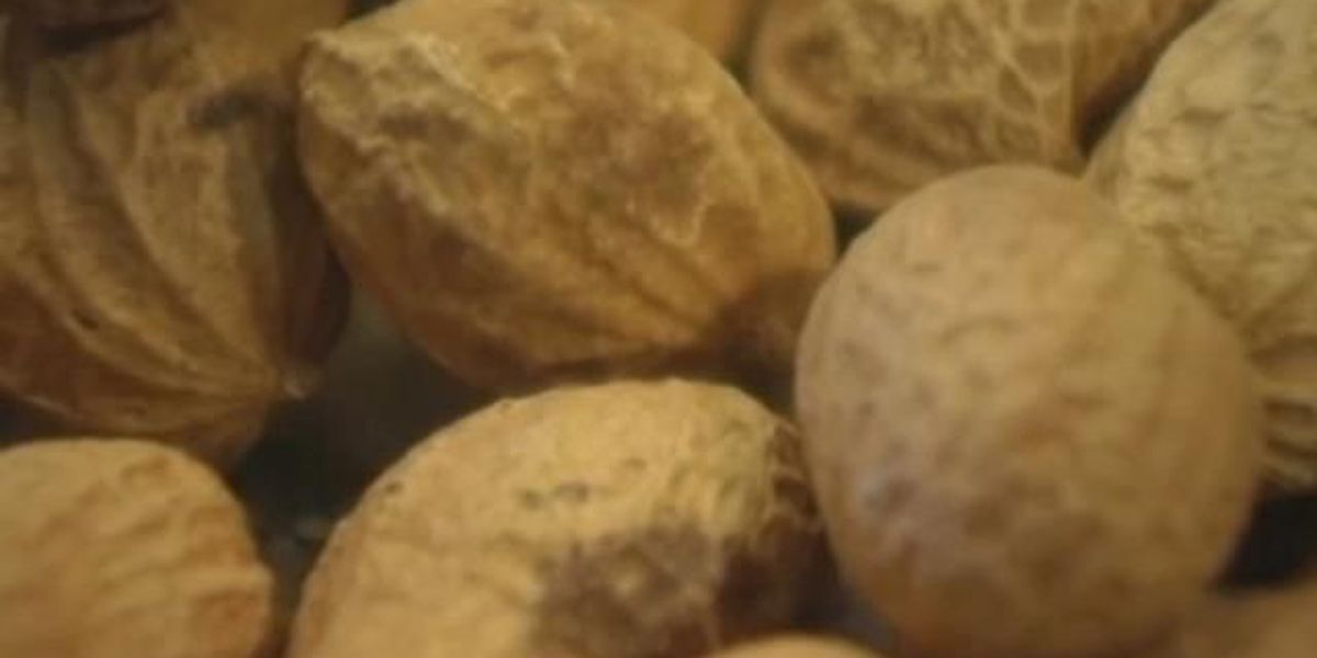 Early introduction may prevent allergies in children