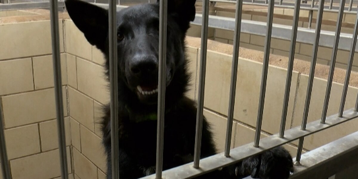 Plainview citizens call for reform at animal shelter