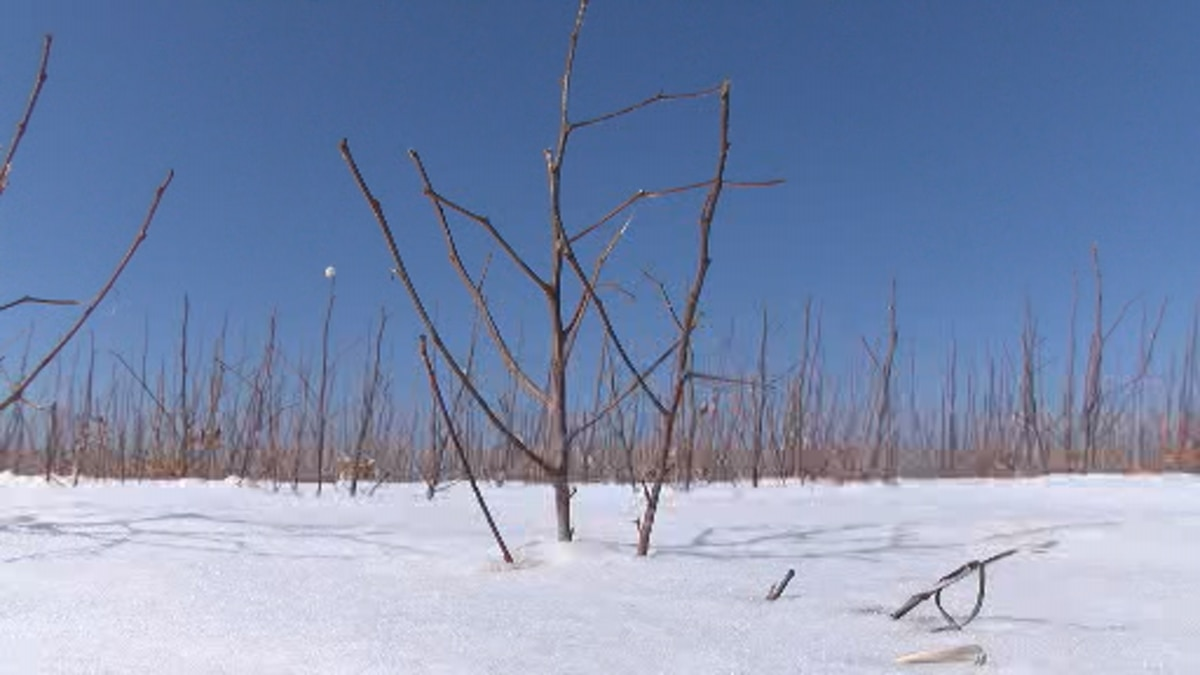Winter storm has minimal impact on West Texas crops