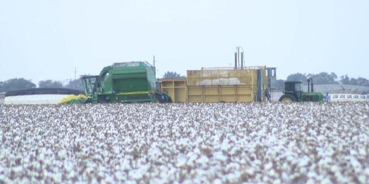 Area farmers grateful for $12 billion in relief funding