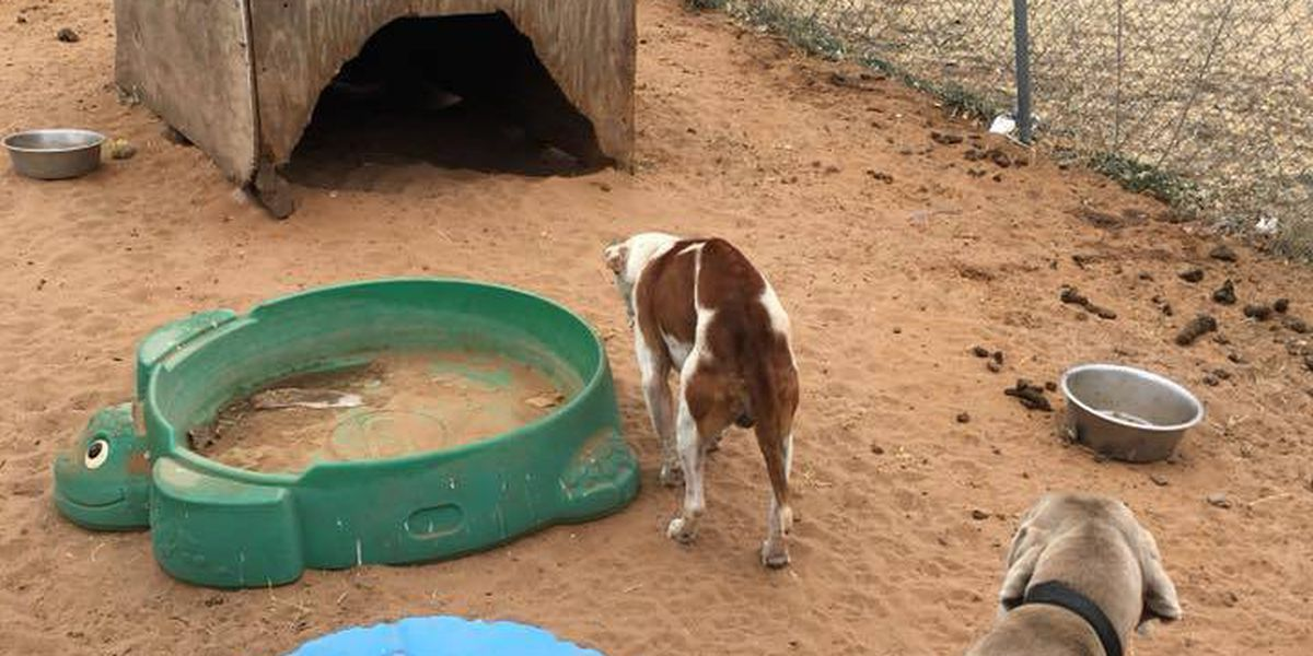 Seagraves police searching for owners of starved, neglected dogs