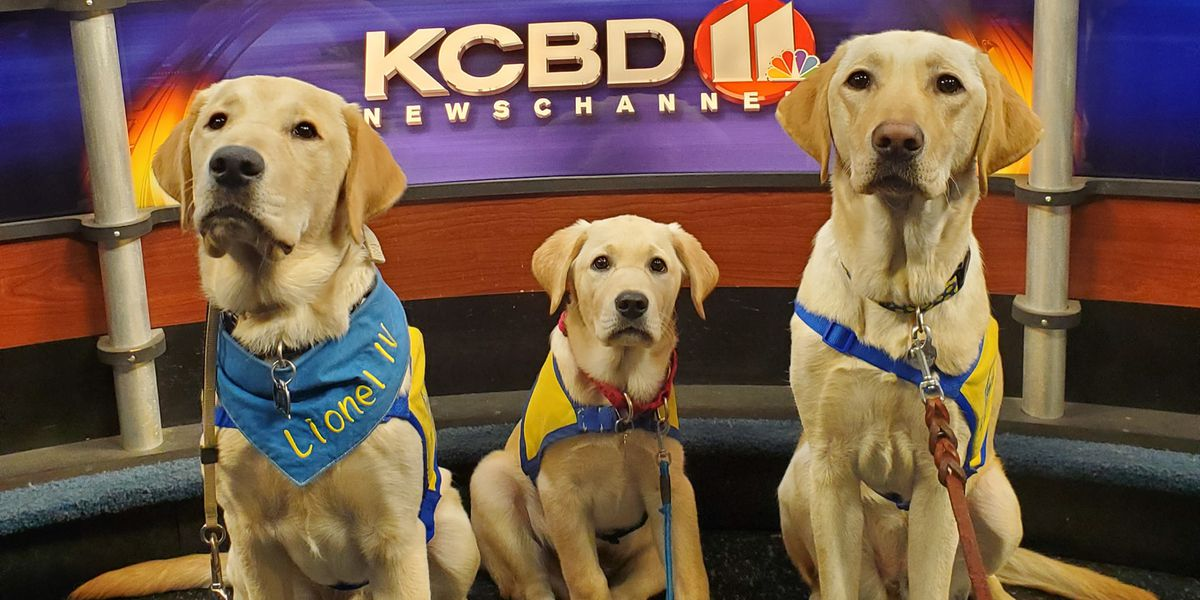 """West Texas Chapter of Canine Companions for independence stopped by for a """"Pup-date"""""""