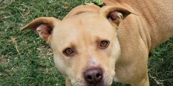 KCBD's Pet of the Day: Meet Lilly