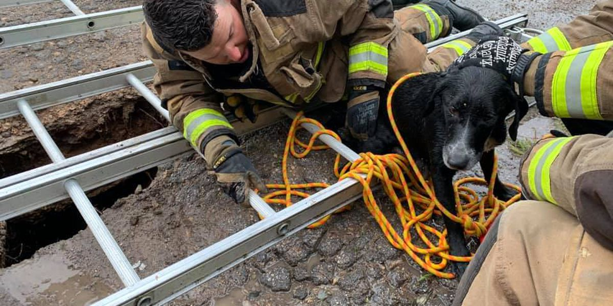 Amarillo firefighter wants to adopt dog he helped rescue from sinkhole