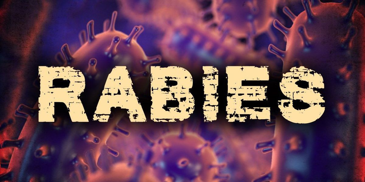 Bat found with rabies in South Lubbock