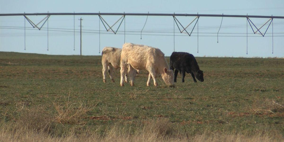 KCBD Investigates: Fatal crash involving livestock sparks liability questions