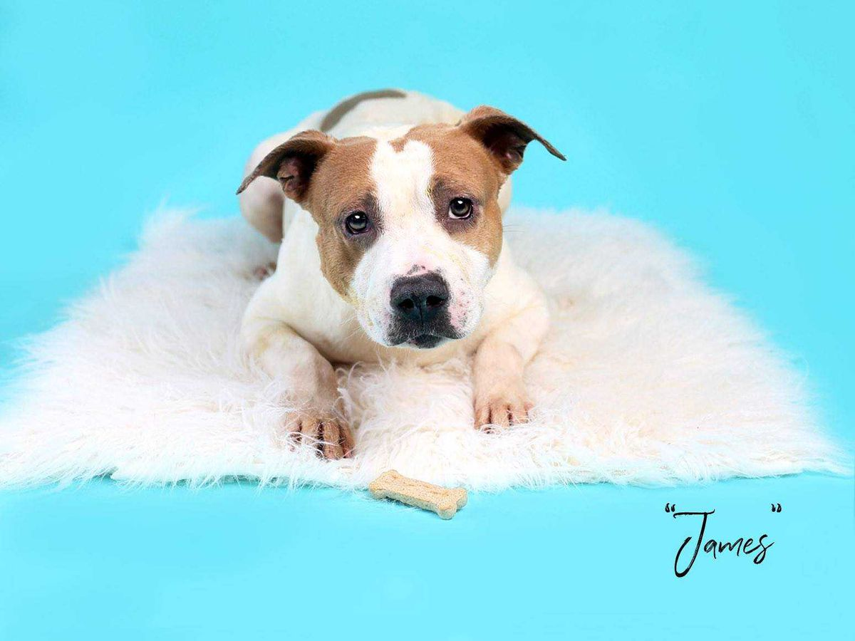 KCBD's Pet of the Day: Meet James