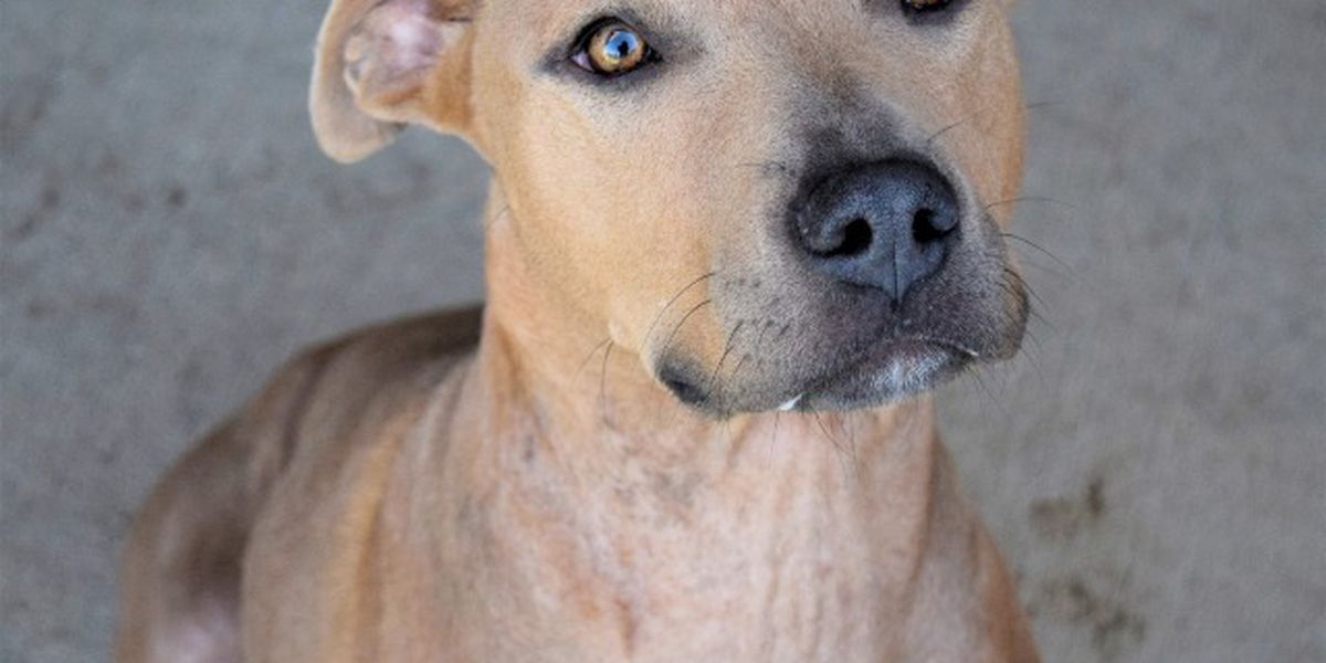 KCBD's Pet of the Day: Meet Maggie