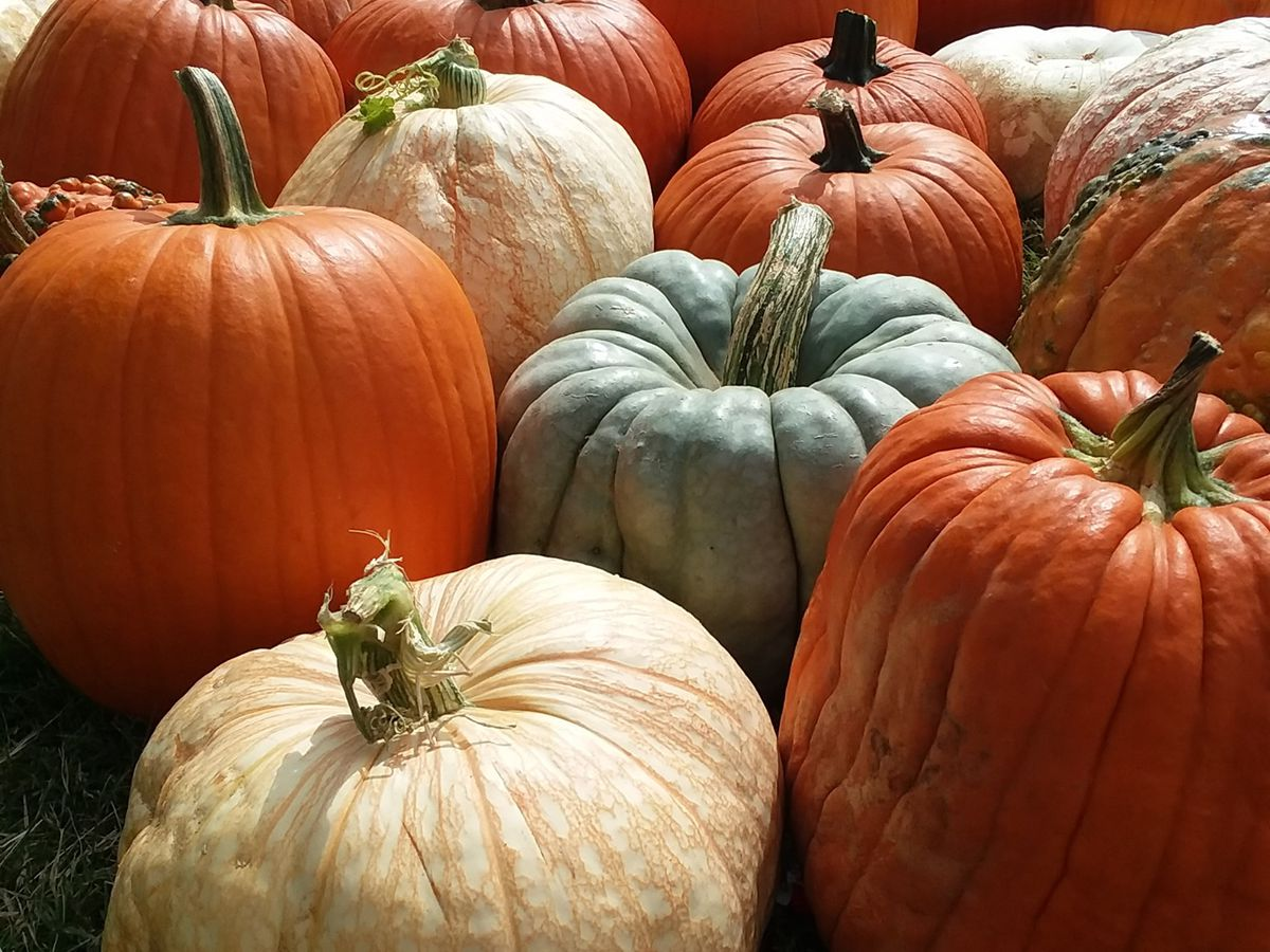 Pumpin Patch at First Cumberland Presbyterian Church, open Sept. 26 through Oct. 31