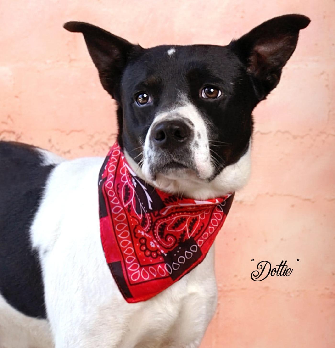 KCBD's Pet of the Day: Meet Dottie