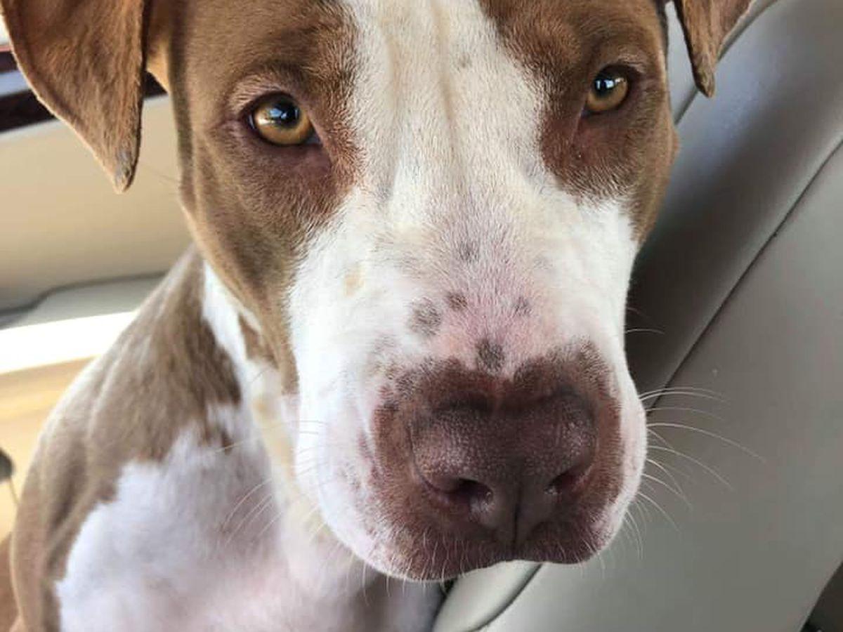 KCBD's Pet of the Day: Meet Kat (a dog)